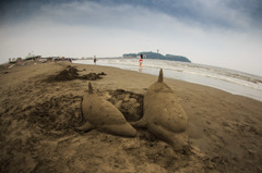 Sand Dolphin