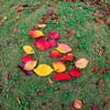 秋を集めて