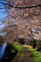 渋田川堤の小径