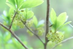 淡い緑に魅せられて 2