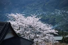 五明谷の春