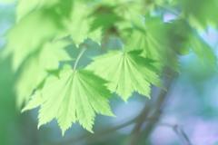淡い緑に魅せられて 3