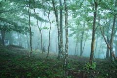 癒しの森2