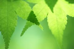 淡い緑に魅せられて1
