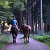 森の散歩3