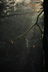 森の表情2