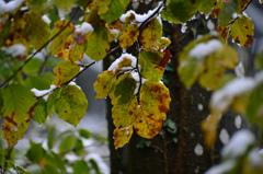 葉の上に雪