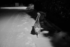 雪の夜散歩1