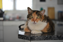 猫のキミ2