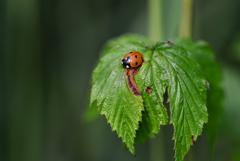 昆虫採集4
