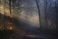 森の表情1