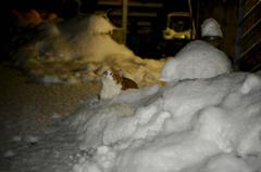 雪が降った。1
