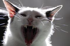 ネコのアレイ