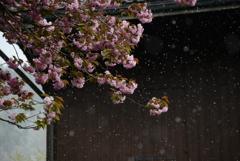 また雪が 1