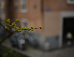 そろそろ春〜?
