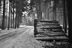 森の散歩2