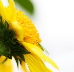 黄色と薄黄緑色