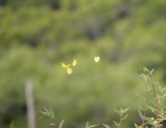 蝶の乱舞 3