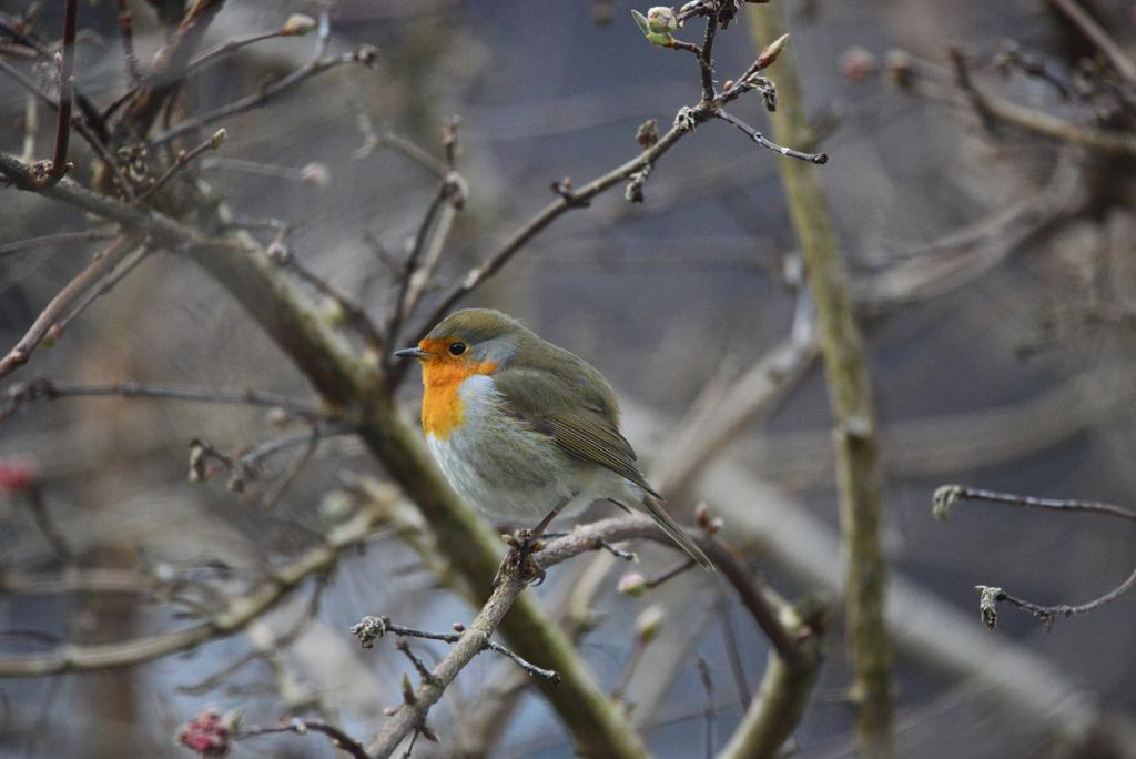 庭に来る小鳥たち1