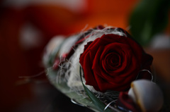 誕生日にバラを〜