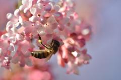 春が来た〜?2