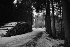 森の散歩1