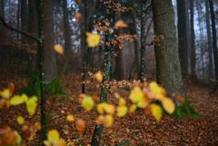 森の彩り1