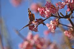 春が来た〜?1