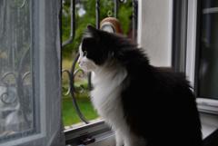 窓から見る1