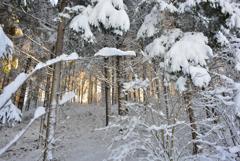 雪の散歩1