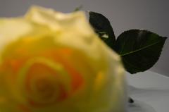 幸せの黄色いバラ 3