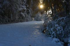 雪の朝 1