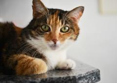 猫のキミ1