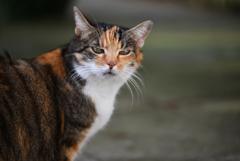 猫ちゃん 1