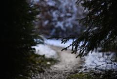 森へ散歩1