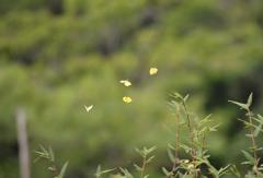 蝶の乱舞 2