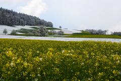 春の雪 1