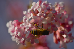 春が来た〜3
