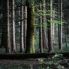 森の中 2