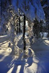 雪の散歩4