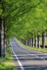 ゼブラ並木