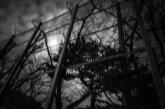 Swaying moonlight