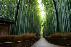 京都行ってきました。~竹林の道~
