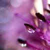 雨の余韻 (3