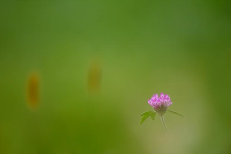 花のワルツ 10