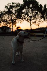 真夏の夕方散歩…