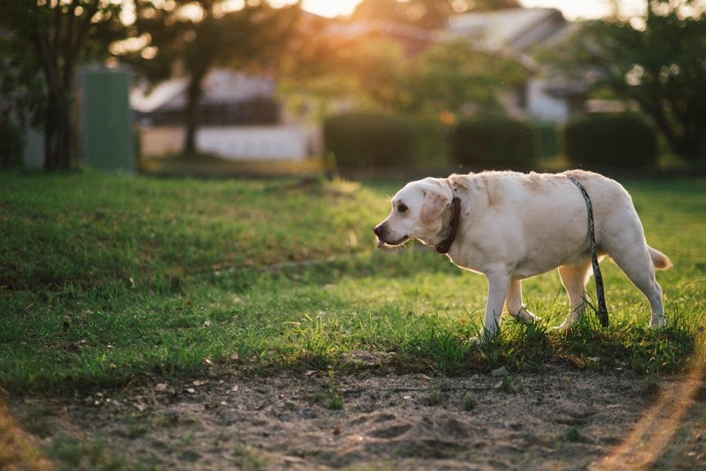 砂場の淵を回る犬…