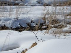 川原の雪景色-2