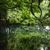 緑に包まれて-丸池様1
