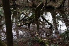 神の池‐丸池様5